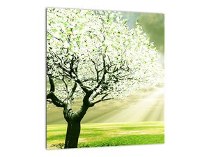 Obraz stromu na lúke (V021282V3030)