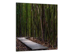 Obraz - Medzi bambusy (V021324V3030)