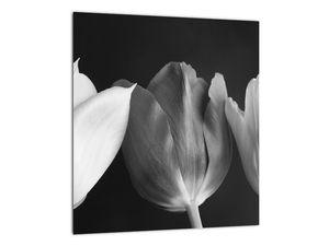 Kép - fekete-fehér tulipán virág (V021916V3030)