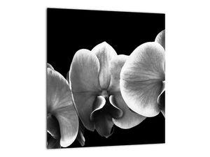 Obraz květu orchideje (V022015V3030)
