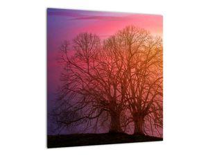Obraz stromů v mlze (V020088V4040)