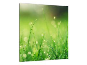 Obraz - rosa na trávě (V020169V4040)