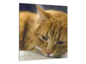 Obraz mačky (V020192V4040)