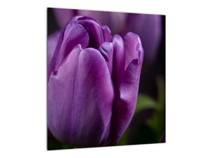 Obraz květů tulipánů (V020215V4040)