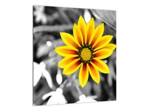 Obraz žluté květiny (V020361V4040)