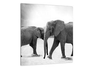 Obraz - černobílí sloni (V020398V4040)