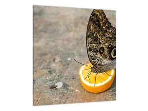Obraz motýla (V020454V4040)