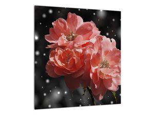 Obraz růžové květiny (V020471V4040)