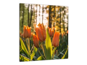 Obraz - oranžové tulipány (V020552V4040)