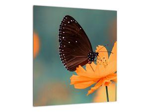 Obraz - motýl na oranžové květině (V020577V4040)