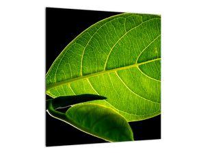 Obraz - zelený list (V020628V4040)