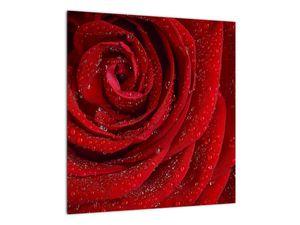 Obraz - detail růže (V020684V4040)