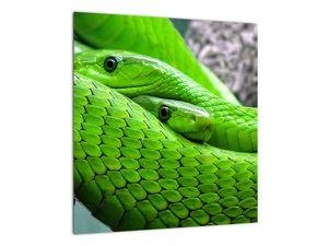 Obraz zelených hadů (V020689V4040)