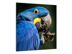 Obraz papouška (V020714V4040)