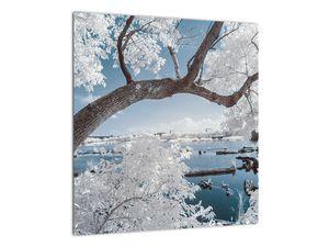 Obraz zasněženého stromu u vody (V020718V4040)