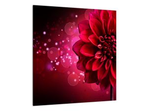 Obraz červené kvety (V020807V4040)