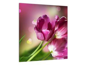 Obraz růžových tulipánů (V020887V4040)