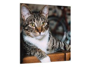 Obraz kočky (V020889V4040)