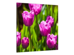 Obraz tulipánov na lúke (V020893V4040)
