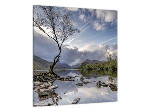 Obraz řeky se stromem (V020917V4040)