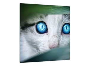 Obraz kočky (V020944V4040)