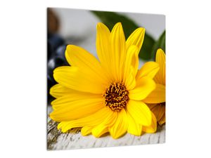 Obraz žluté květiny (V020952V4040)