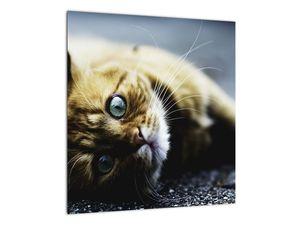Obraz kočky (V020963V4040)
