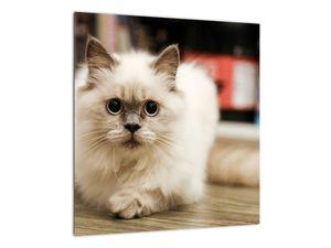 Obraz bílé kočky (V021124V4040)