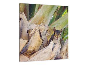 Obraz veverky na stromu (V021177V4040)