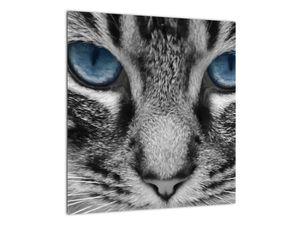 Obraz kočky (V021221V4040)