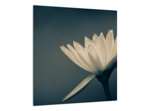 Obraz květiny (V021223V4040)