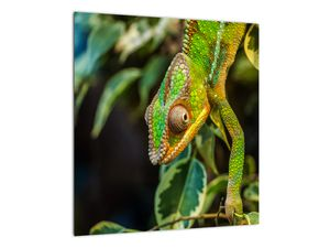 Obraz chameleona (V021236V4040)