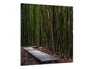 Obraz - Medzi bambusy (V021324V4040)