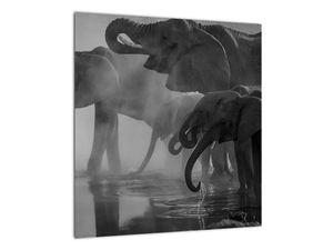 Obraz slonů - černobílý (V021575V4040)