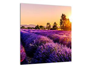 Obraz levandulového pole, Provence (V021590V4040)