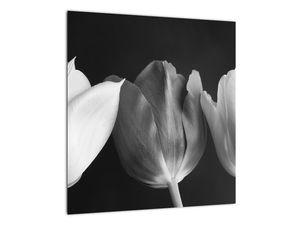 Kép - fekete-fehér tulipán virág (V021916V4040)