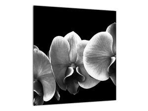 Obraz květu orchideje (V022015V4040)