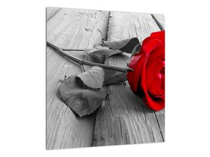 Slika crvene ruže (V022288V4040)