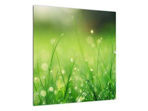 Obraz - rosa na trávě (V020169V5050)