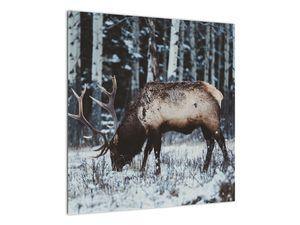 Obraz - jeleň v zime (V020179V5050)
