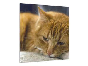 Obraz mačky (V020192V5050)