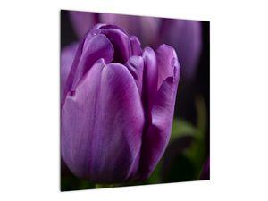 Obraz květů tulipánů (V020215V5050)