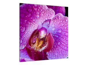 Detailní obraz květu orchideje (V020314V5050)