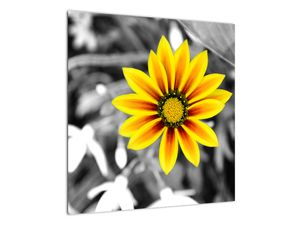 Obraz žluté květiny (V020361V5050)