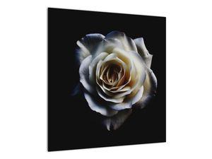 Obraz bílé růže (V020370V5050)