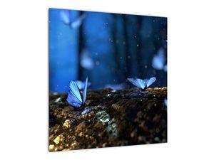 Obraz modrých motýlů (V020434V5050)