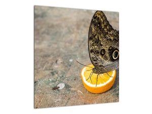 Obraz motýla (V020454V5050)