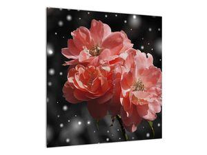 Obraz růžové květiny (V020471V5050)