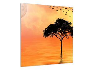 Obraz stromu v západu slunce (V020480V5050)
