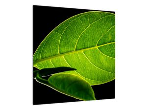 Obraz - zelený list (V020628V5050)